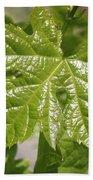 Spring Grape Leaf Beach Towel