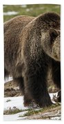 Spring Grizzly Bear Beach Towel