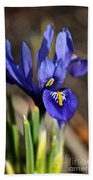 Spring Iris Beach Towel