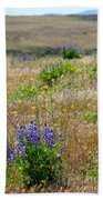 Spring Lupines And Cheatgrass Beach Towel