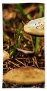 Spring Mushrooms Beach Towel