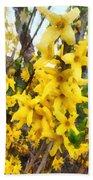 Spring - Sprig Of Forsythia Beach Towel