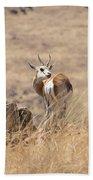 Springbok V3 Beach Towel
