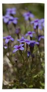 Springtime Tiny Bluet Wildflowers - Houstonia Pusilla Beach Towel