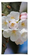 Sprouting Cherry Blossoms Beach Towel