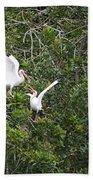 Squabbling Birds Beach Towel