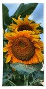 Squamish Sunflower Portrait Beach Towel