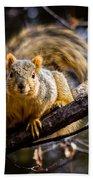 Squirrel 2 Beach Towel