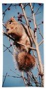 Squirrel Berry Beach Towel