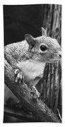 Squirrel Black And White Beach Towel