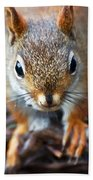 Squirrel Close-up Beach Towel