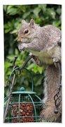 Squirrel Eating Nuts Beach Sheet