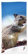 Squirrel Enjoying Lunch On The Beach Beach Towel