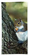 Squirrel In A Tree Beach Towel