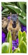 Squirrel In The Botanic Garden Beach Towel