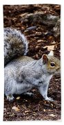 Squirrel In The Park-boston  V6 Beach Towel