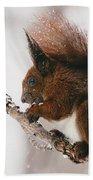 Squirrel In Winter Beach Towel