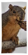 Squirrel Lunch Time Beach Towel