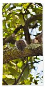 Squirrel On A Branch Beach Towel