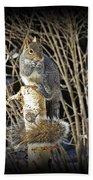 Squirrel On Birch Post Beach Towel