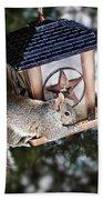 Squirrel On Bird Feeder Beach Towel by Elena Elisseeva