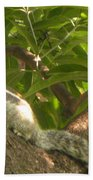 Squirrel On The Tree Beach Towel