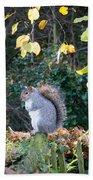 Squirrel Perched Beach Towel