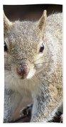 Squirrel Profile Beach Towel
