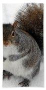 Squirrel Saying Feed Me Please At Niagara Falls Beach Towel