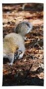 Squirrel Time Beach Towel