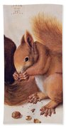 Squirrels Beach Towel