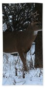 Stag In The Woods Beach Towel