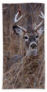 Stag Beach Towel