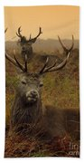 Williams Fine Art Stag Party The Series  Beach Towel