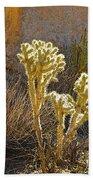 Staghorn Cholla Cactus Catching Sunlight In Joshua Tree Np-ca Beach Towel