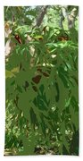 Staghorn Cutout Beach Towel