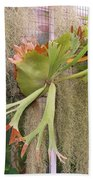 Staghorn Fern Beach Towel