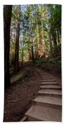 Stairs Into The Woods Beach Towel