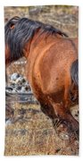Stallions Gone Crazy Beach Towel