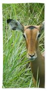 Standing In The Grass Impala Antelope  Beach Towel