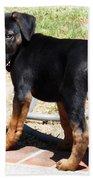 Standing Puppy Beach Towel