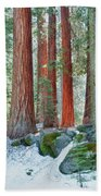 Standing Tall - Sequoia National Park Beach Towel