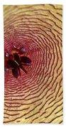 Stapelia Grandiflora - Close Up Beach Towel