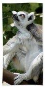 Lemur Stare Beach Towel