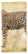 Stare Of The Cheetah Beach Towel