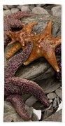 Starfish 2 Beach Towel