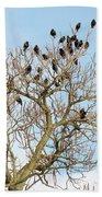 Starlings For Leaves - Sturnus Vulgaris Beach Towel