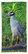 Stately Heron Beach Towel