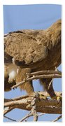 Steppe Eagle Aquila Nipalensis 2 Beach Towel