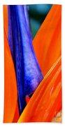 Strelitzia Colour Beach Towel